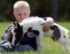 boy-and-tiny-horse